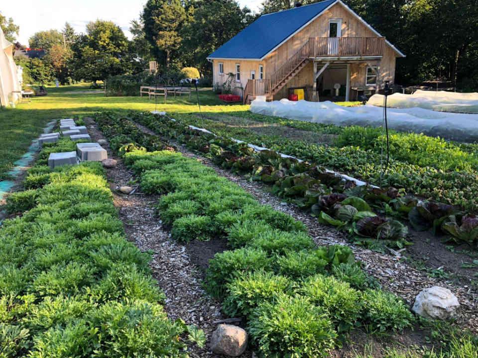 Fermiers de famille paniers bio légumes biologiques Les Jardins de la Mescla Neuville Ulocal produit local achat local
