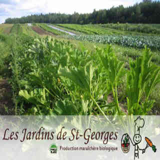 Family farmers organic fruit baskets organic vegetables Saint-Georges Saint-Thècle Ulocal local product local purchase