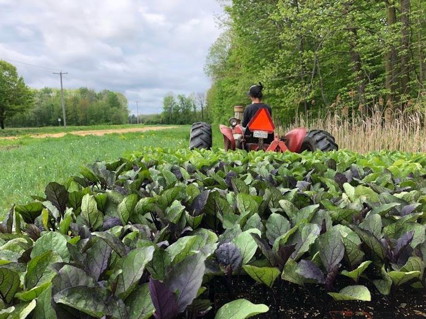 Fermiers de famille fruits et légumes bio paniers bio Les Jardins de Tessa Senc. Frelighsburg Ulocal produit local achat local
