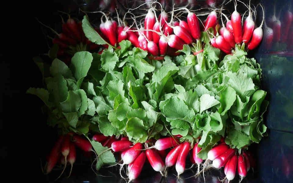 Fermiers de famille fruits et légumes bio Le Jardin des Funambules Saint-François-Xavier-de-Brompton Ulocal produit local achat local