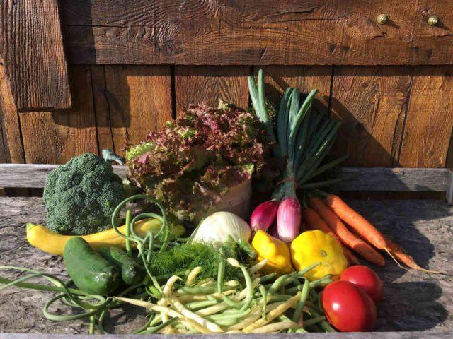Fermiers de famille paniers bio fruits et légumes Les Jardins DiversiBio Farnham Ulocal produit local achat local