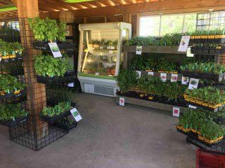 Fermiers de famille fruits et légumes bio Haricot Magique & Marie Bio Saint-Basile-le-Grand Ulocal produit local achat local