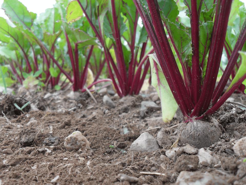 Fermiers de famille panier bio fruits et légumes Les Jardins du Pied de Céleri Coop de Solidarité Dunham Ulocal produit local achat local