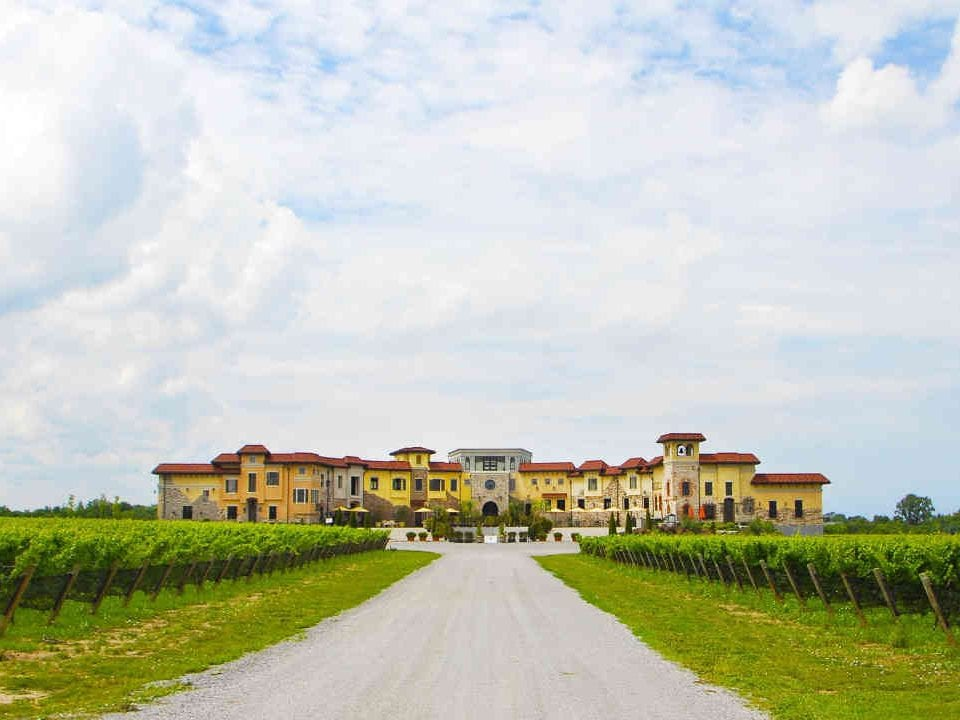 Vineyard vineyard Colaneri Estate Winery St. Catharines Ulocal local product local purchase