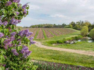 Vignoble vignoble Featherstone Estate Winery Lincoln Ulocal produit local achat local
