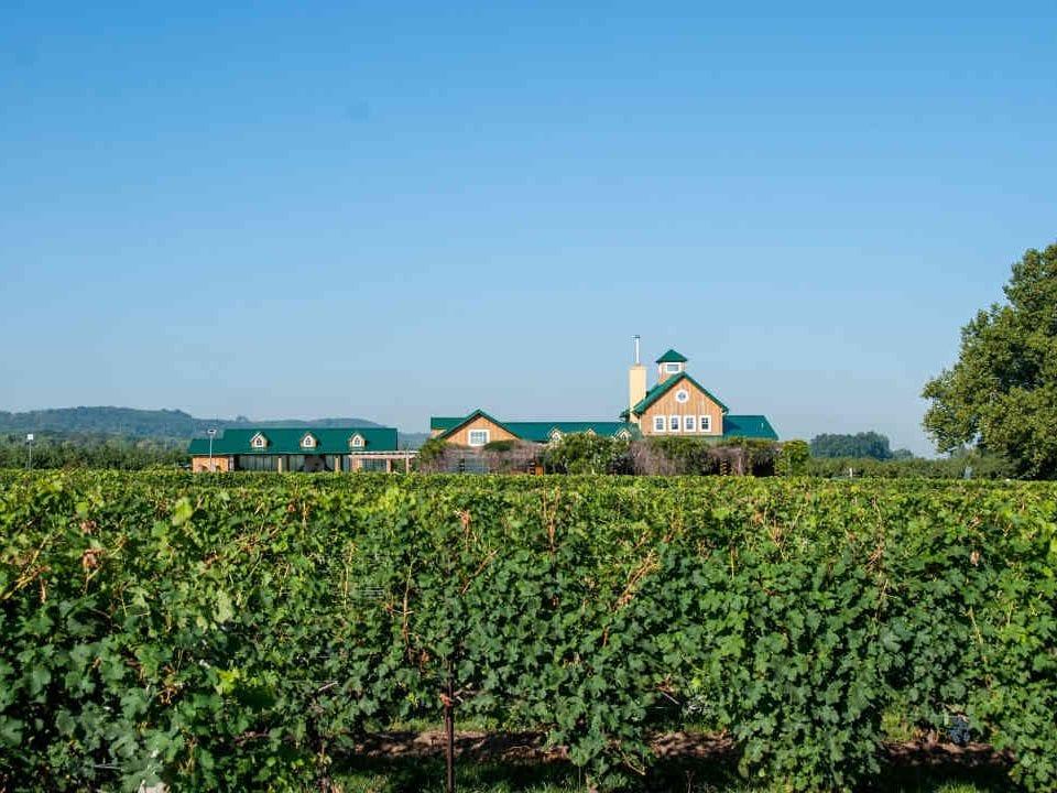 Vignoble vignoble The Good Earth Food and Wine Company Lincoln Ulocal produit local achat local