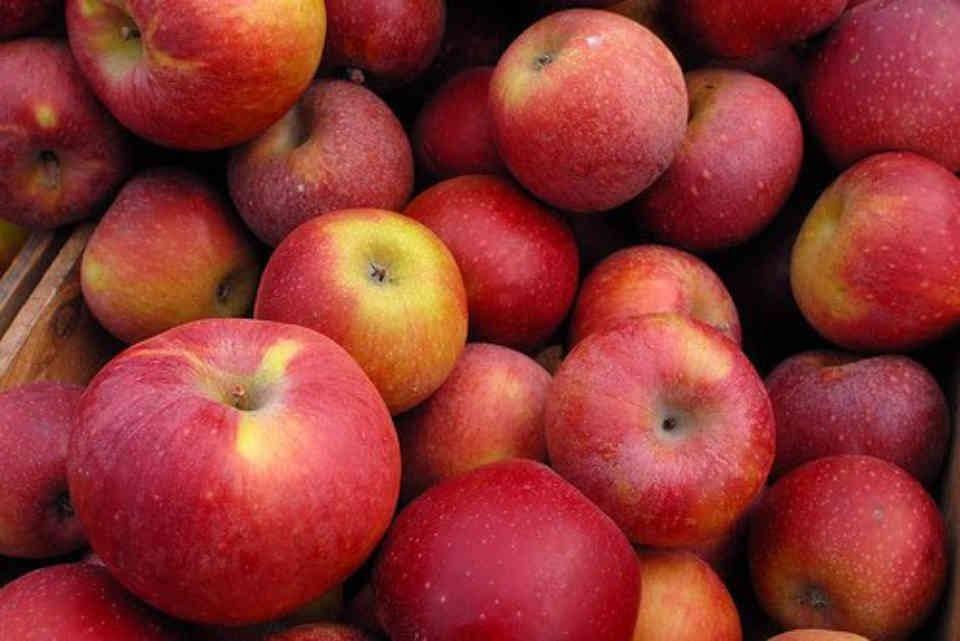 Autocueillette pommes Halls Apple Market Brockville Ulocal produit local achat local
