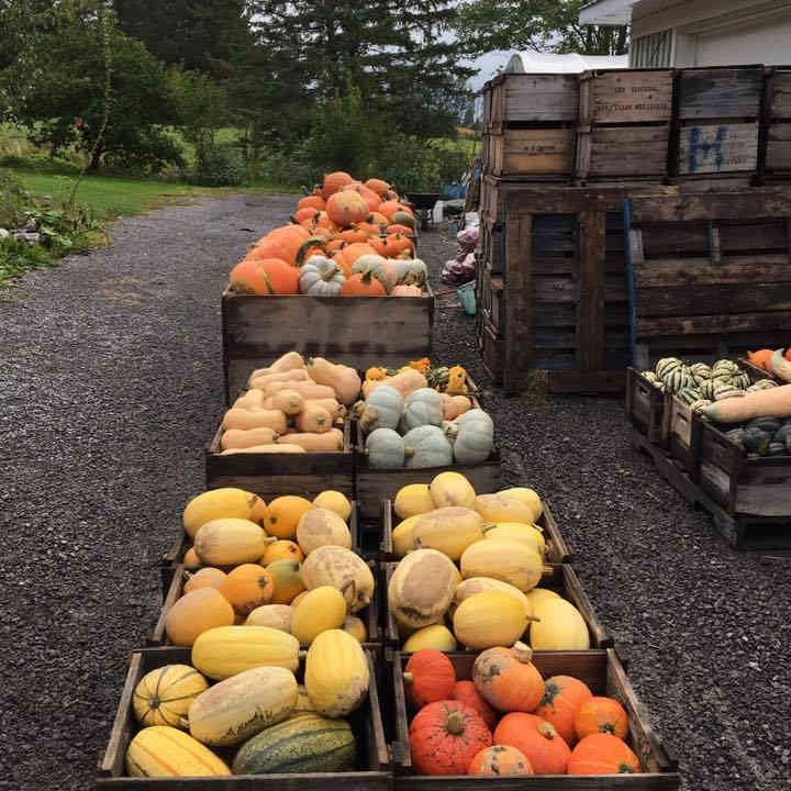 Produce Market squash and pumpkin Harvest Moon Orchard Ottawa Ulocal Local Product Local Purchase