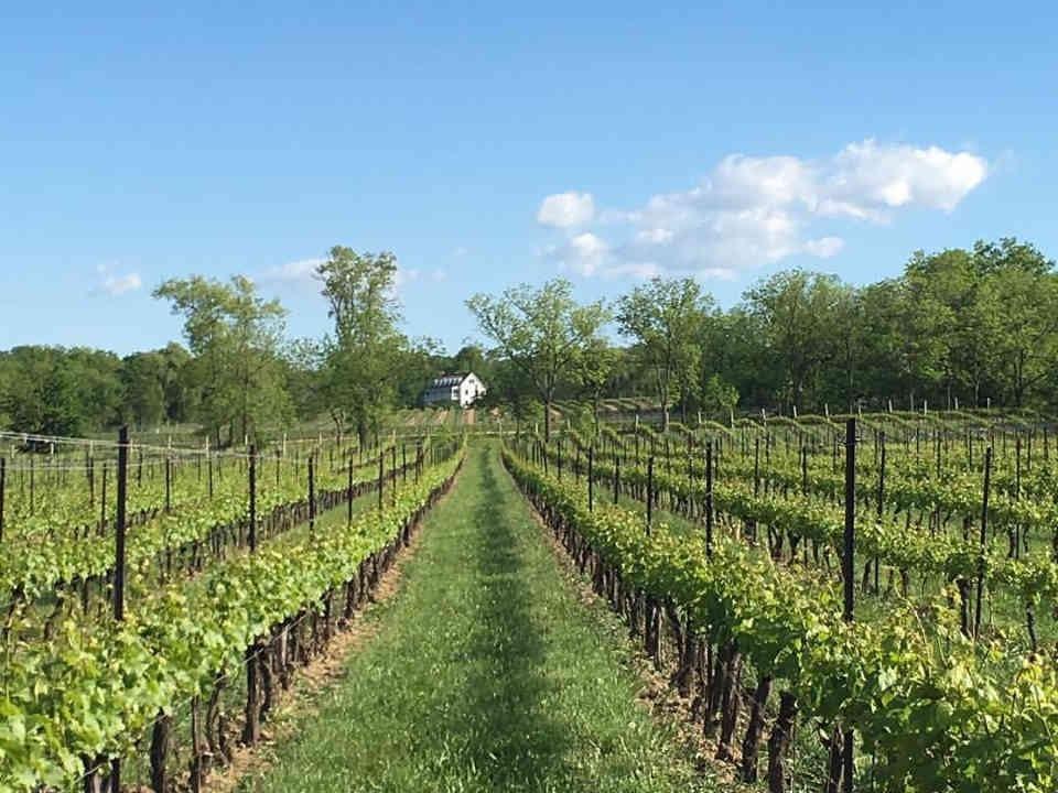Vignoble vignoble Hidden Bench Estate Winery Lincoln Ulocal produit local achat local