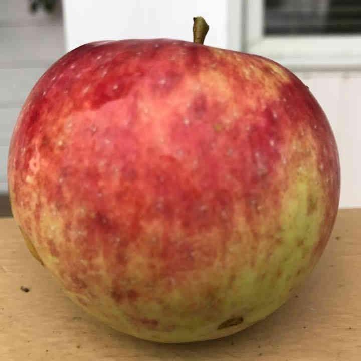 Marché de fruits et légumes pomme Kilmarnock Orchard Jasper Ulocal produit local achat local