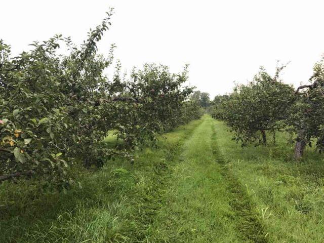 Marché de fruits et légumes pommier Kilmarnock Orchard Jasper Ulocal produit local achat local