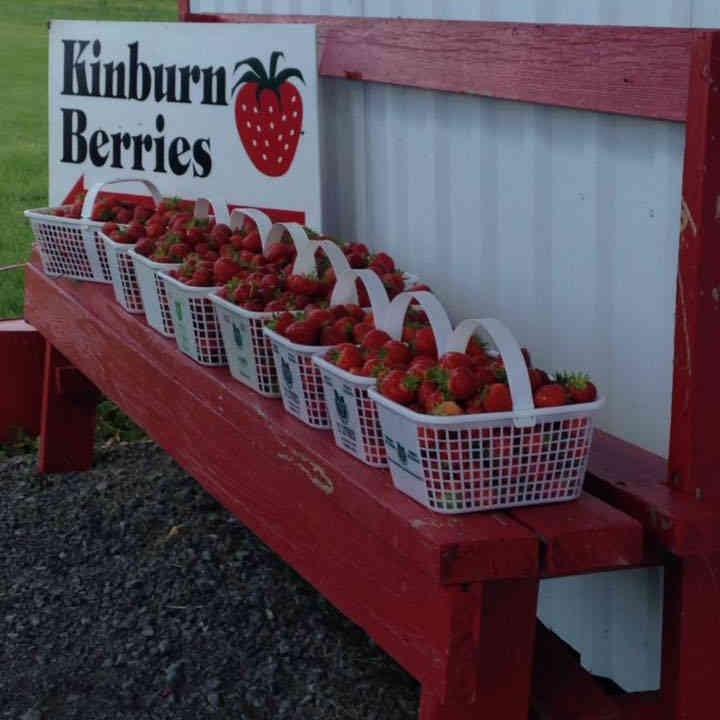 Produce picking strawberries Kinburn Berries Kinburn Ulocal local product local purchase