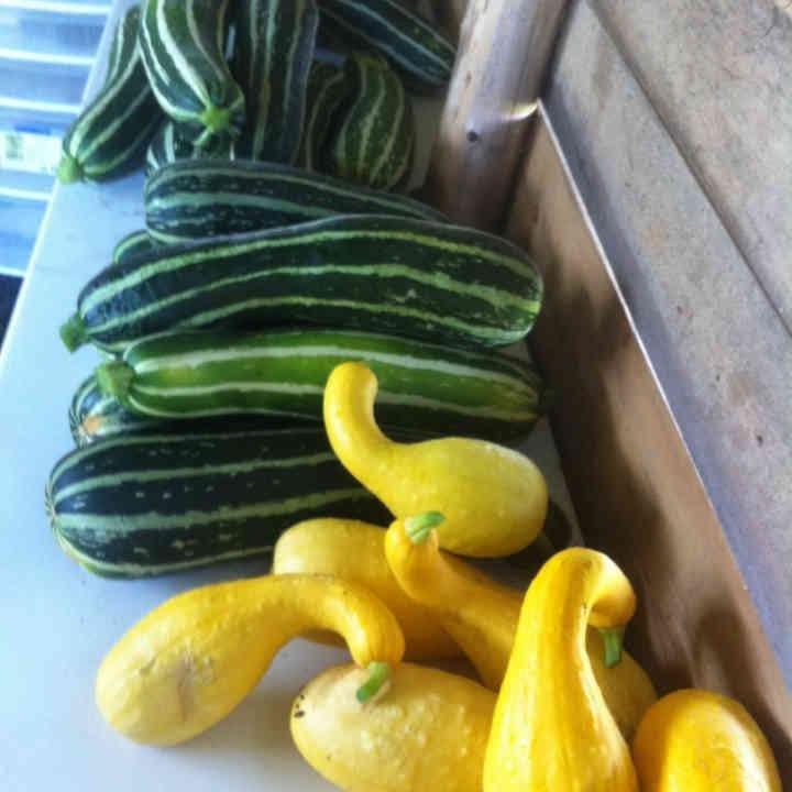 Marché de fruits et légumes courgettes Kinburn Farms Kinburn Ulocal produit local achat local