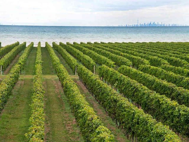 Vignoble vignoble Konzelmann Estate Winery Niagara-on-the-Lake Ontario Canada Ulocal produit local achat local
