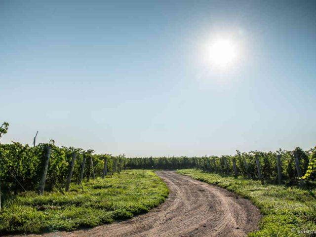 Vignoble vignoble Stratus Vineyard Niagara-on-the-Lake Ontario Canada Ulocal produit local achat local