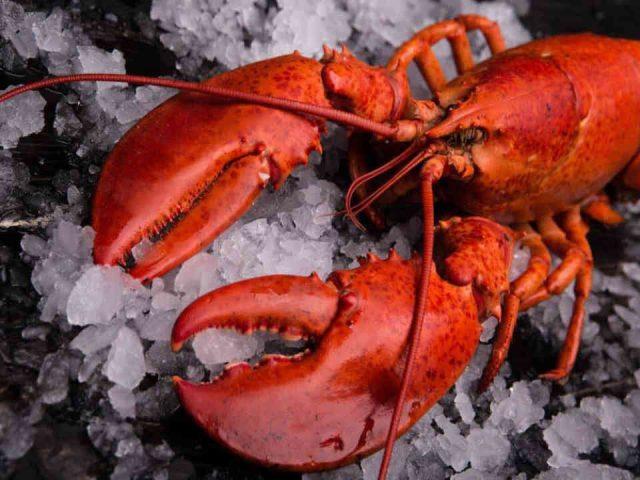 Alimentation poissonnerie fruits de mer café Les Délices de la Mer Sainte-Anne-des-Monts Ulocal produit local achat local