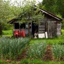 Fermiers de famille fruits et légumes biologiques Ferme aux trois soleils Saint-Fulgence Ulocal produit local achat local