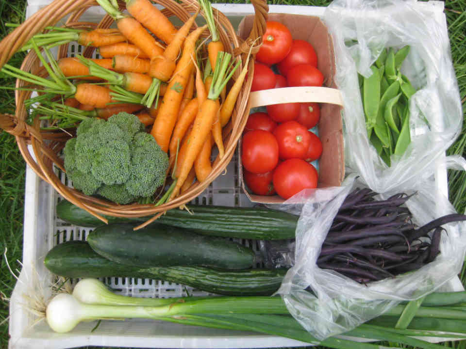 Farmers family fruit and vegetables organic meat sales Farm Good Creation Saint-Alfred Ulocal local product local purchase