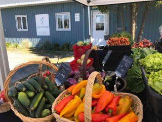 Fermiers de famille fruits et légumes biologiques paniers bio Ferme Château Bar Danville Ulocal produit local achat local