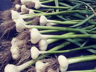 Fermiers de famille fruits et légumes biologiques Ferme Ciel et Racines Lawrenceville Ulocal produit local achat local