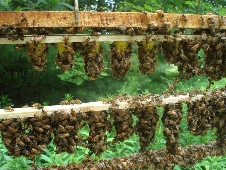 Fermiers de famille fruits et légumes bio miel apiculteur Ferme Côté Jardin Cookshire-Eaton Ulocal produit local achat local