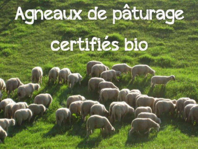 Ventes de viande fermiers de famille moutons Ferme de la Colline Labelle Ulocal produit local achat local