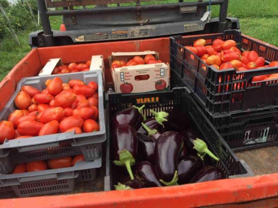 Fermiers de famille fruits et légumes biologiques paniers bio La Ferme de la racine carrée Bolton-Ouest Ulocal produit local achat local