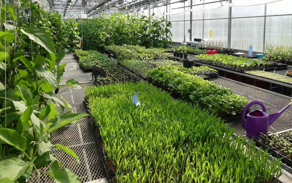 Fermiers de famille paniers fruits et légumes biologiques Ferme-école BioVicto Victoriaville Ulocal produit local achat local