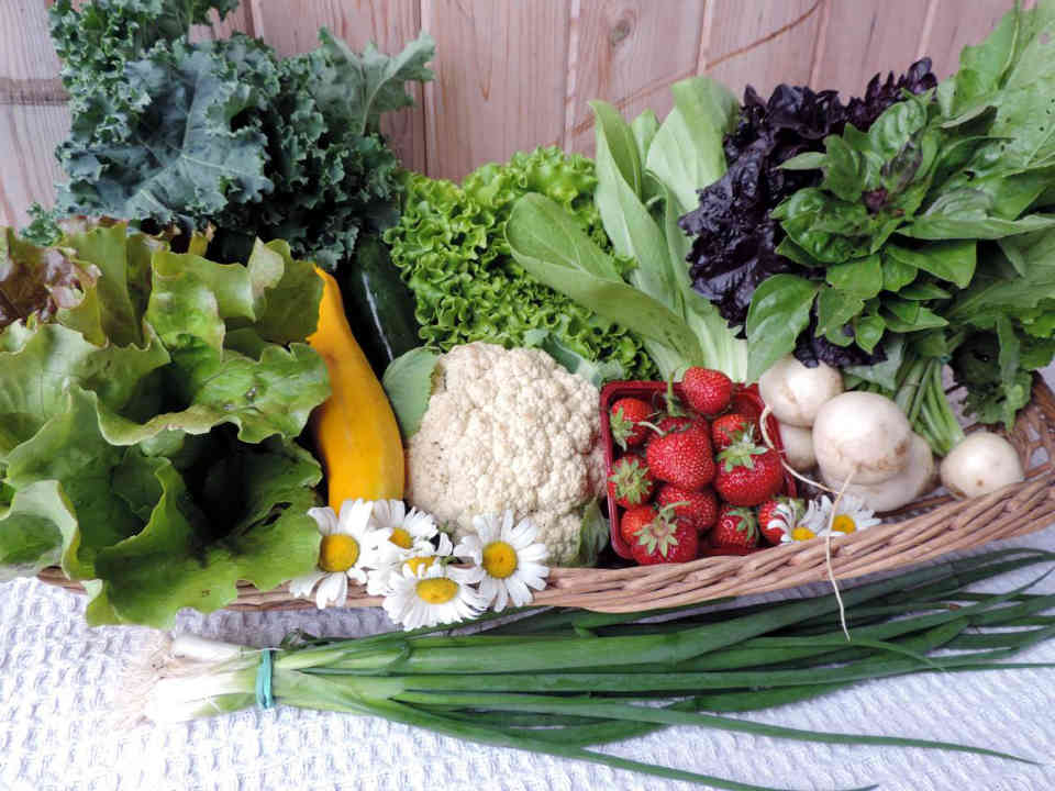 Farmers of organic fruits and vegetables family organic baskets Coop The Gardens of the Resistance Ormstown Ulocal local product local purchase