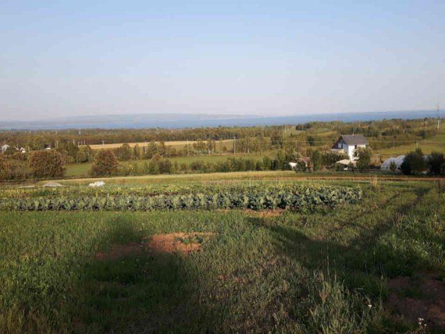 Fermiers de famille fruits et légumes bio La cigale et la fourmi Carleton-sur-Mer Ulocal produit local achat local