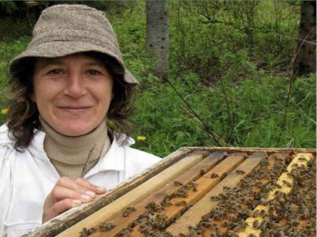 apiculteur miel petits fruits La fermette d'antan Percé Québec Canada Ulocal produit terroir produit local achat local