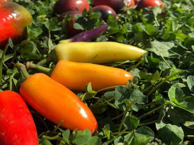 Fermiers de famille fruits et légumes bio paniers bio Les jardins du Bois de l'Ail Saint-Flavien Ulocal produit local achat local