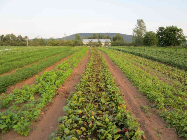 Fermiers de famille paniers bio fruits et légumes Les Jardins du Pied à Terre Lamartine Ulocal produit local achat local