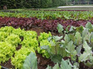 Fermiers de famille paniers bio fruits et légumes bio Les Jardins Écho Logiques Notre-Dame-des-Monts Ulocal produit local achat local