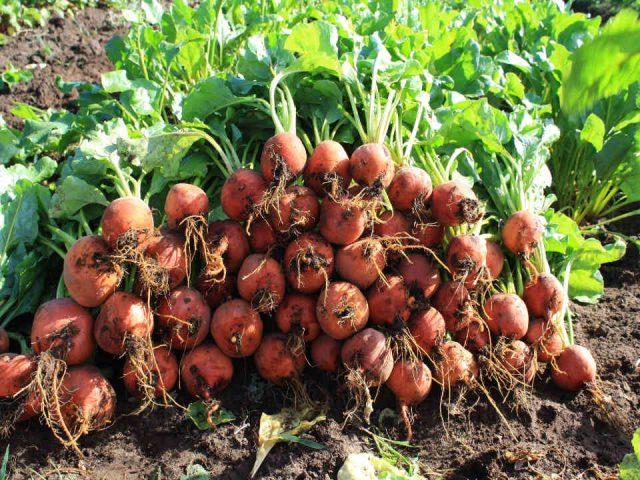 Fermiers de famille fruits et légumes bio paniers bio Les Jardins Naturlutte Ulverton Ulocal produit local achat local