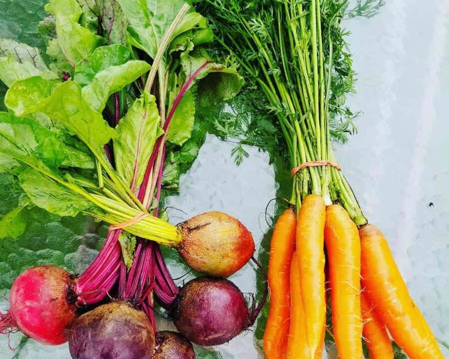 Fermiers de famille fruits et légumes bio paniers bio Ô Saine Terre L'Assomption Ulocal produit local achat local