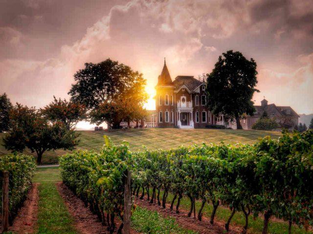 Vignoble vignoble Peninsula Ridge Estates Winery Lincoln Ulocal produit local achat local