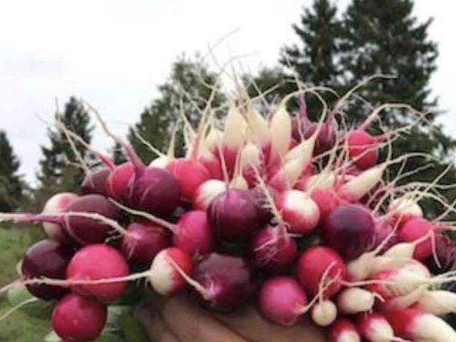Fermiers de famille fruits et légumes bio paniers bio Prémices de la terre L'Ange-Gardien Ulocal produit local achat local
