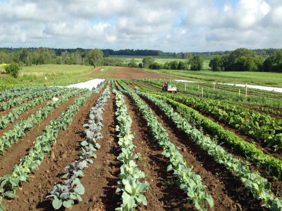 Family Farmers organic fruit and vegetables organic baskets Productions Maraîcheres Clement Roy Donnacona Ulocal local product local purchase