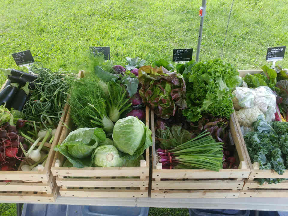 Farmers Family Organic Fruit and Vegetable Baskets Organic Roots & Chlorophyll Stoke Ulocal Local Product Local Purchase
