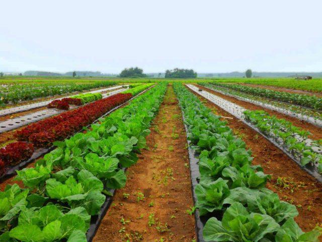 Fermiers de famille fruits et légumes paniers bio Récoltes Buissonnières Repentigny Ulocal produit local achat local