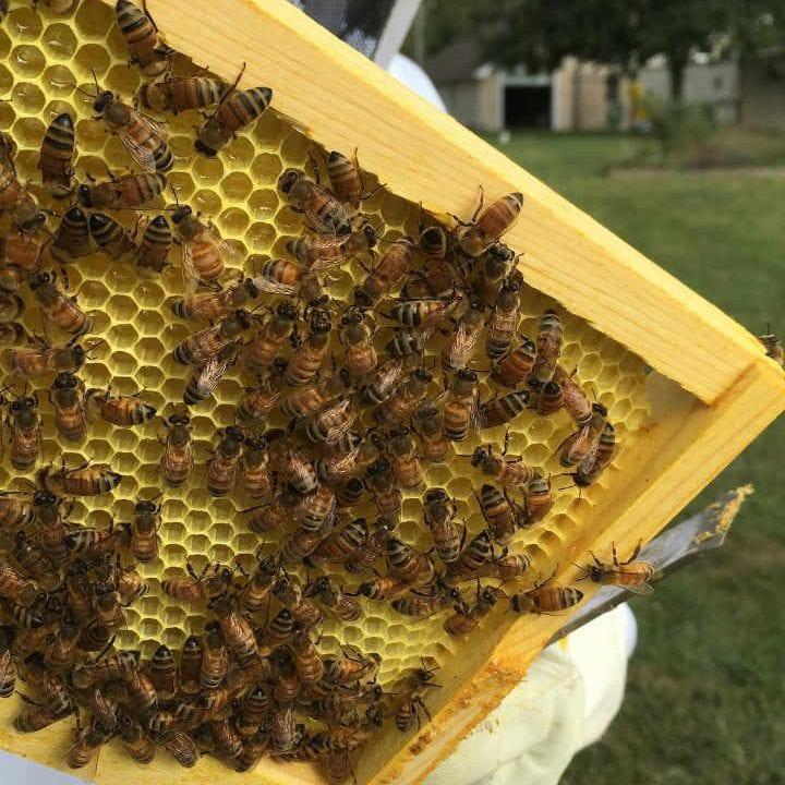 Vente de viande abeilles miel Amaranth Farm Rochester Illinois États-Unis Ulocal produit local achat local