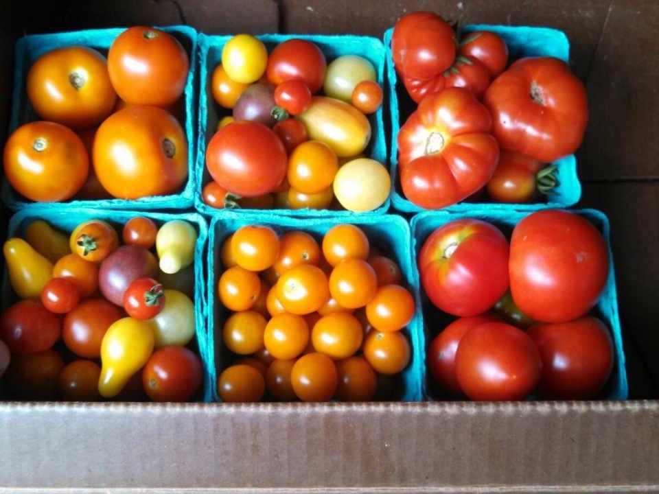 Fermier de famille tomates Bare Foot Organics Lebanon Pennsylvania États-Unis Ulocal produit local achat local