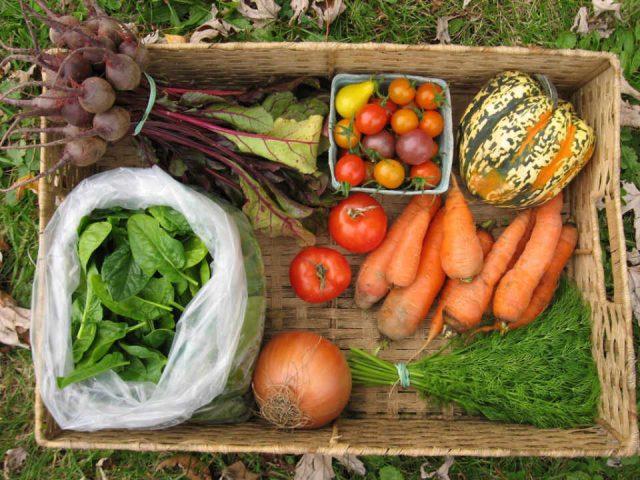 Fermier de famille légumes East Brook Community Farm Walton New York États-Unis Ulocal produit local achat local