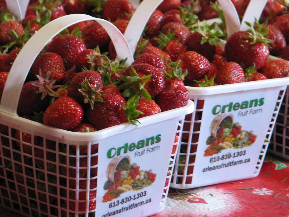 Marché de fruits et légumes fraises La ferme d'Orléans - Orleans Fruit Farm Ltd Ottawa Ontario Canada Ulocal produit local achat local