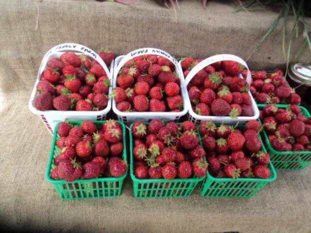 Marché public fraises Manotick Farmers Market Ottawa Ontario Canada Ulocal produit local achat local