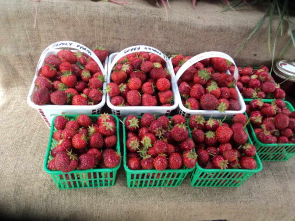 Public Market strawberries Manotick Farmers Market Ottawa Ontario Canada Ulocal Local Product Local Purchase