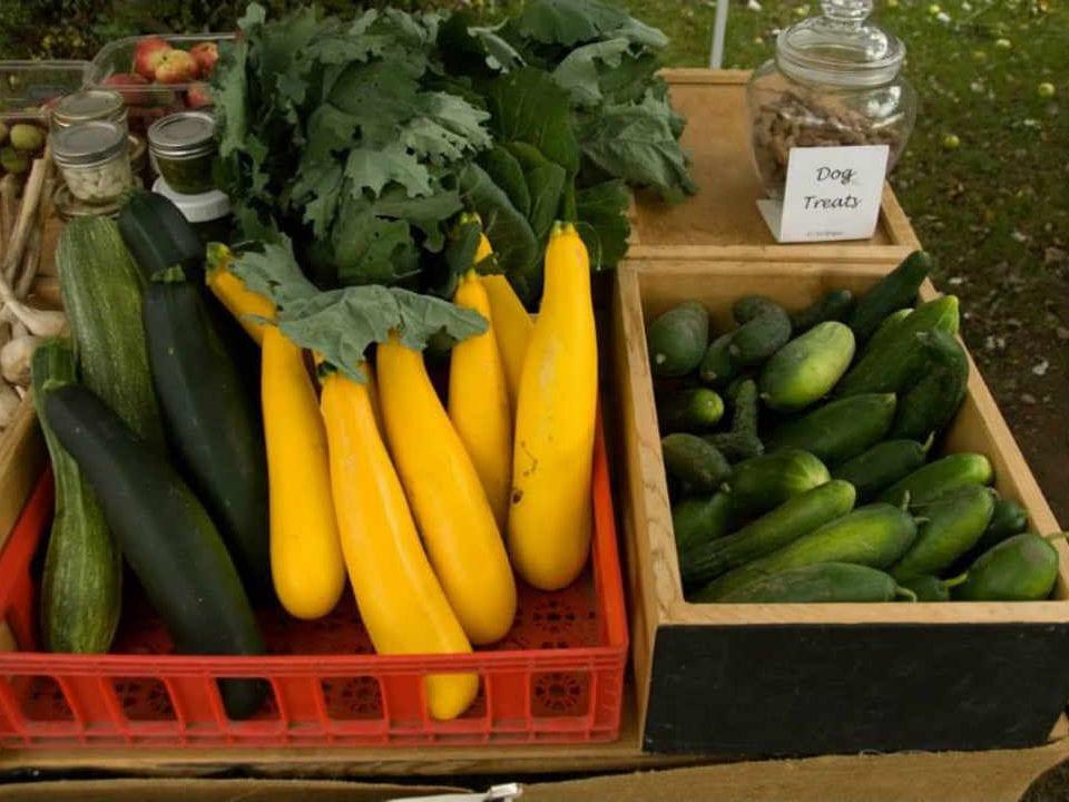 Public Market zucchini cucumber McDonald's Corners Farmers' Market Mc Donald's Corners Ontario Canada Ulocal Local Product Local Purchase