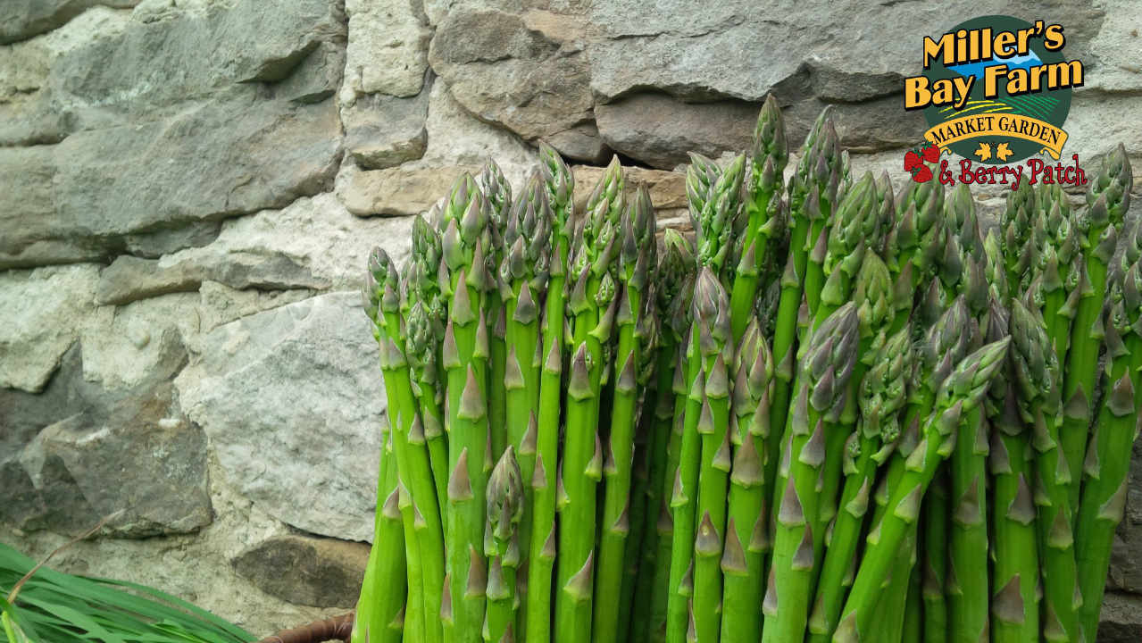 Family Farmer asparagus Miller's Bay Farm Lombardy Ontario Canada Ulocal Local Product Local Purchase