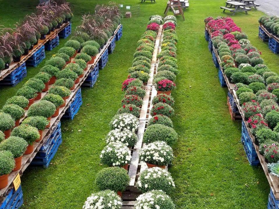 Marché de fruits et légumes fleurs Millers Farm, Market & Garden Centre Ottawa Ontario Canada Ulocal produit local achat local
